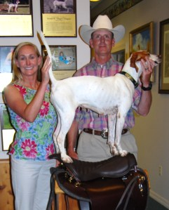 Region 6 All Age Dog of the Year- Amy & Bubba Spencer with Cocklebur's Treasure Quest